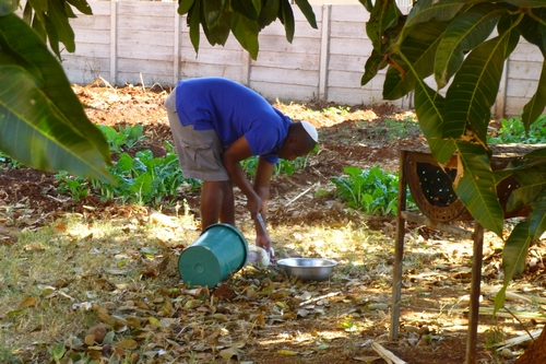Planting in Harare. Modreck works in the Community House garden which the family is developing to supply food for residents and visitors (Photo by Mickey Feinberg)